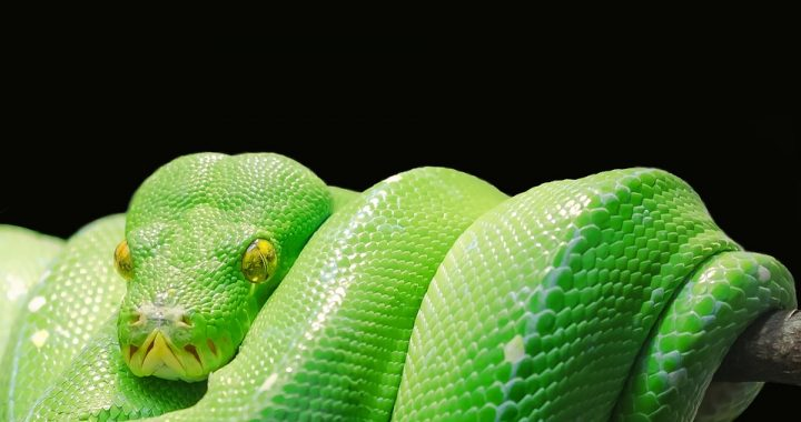does hawaii have poisonous snakes
