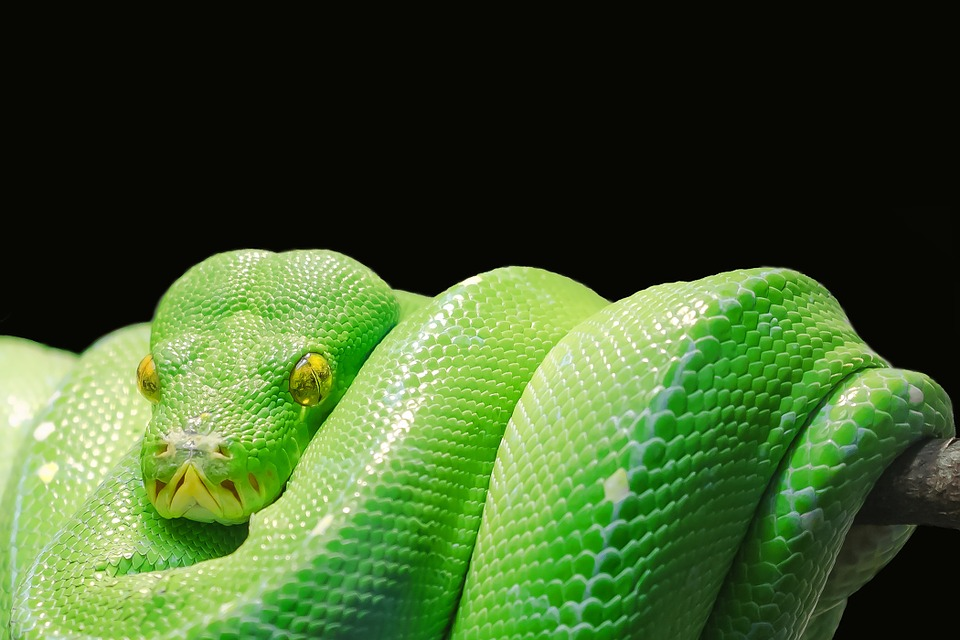 No Snakes In Hawaii Is It True Your Hawaii Travel Agent