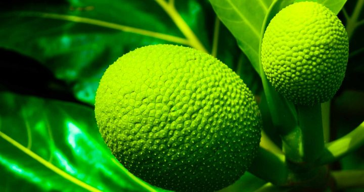 3 Things You Didn't Know About Breadfruit